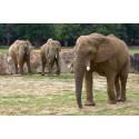 éléphants Zoo de Thoiry