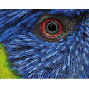 perroquet Cerza