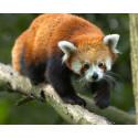 tarif réduit Zoo des Sables d'olonnes