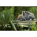 code promo Zoo des Sables d'Olonnes