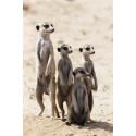 billet moins cher Zoo des Sables d'Olonnes