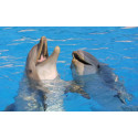 tarif Réduit Marinland dauphin