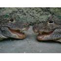 tarif la Planète Crocodile