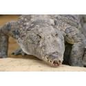 Tarif réduit La ferme aux crocodiles