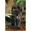 Tarif réduit Zoo de Paris