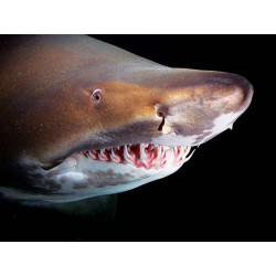 prix visite Aquarium de la Rochelle moins cher