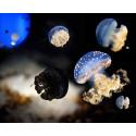 prix visite Aquarium de la Rochelle pas cher