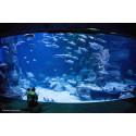 Tarif billet visite aquarium planetocean World Montpellier