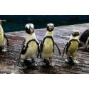 Tarif ticket visite aquarium planetocean World Montpellier
