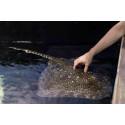 prix billet visite aquarium planetocean World Montpellier