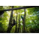 Réduction ticket forêt Adrénaline Carnac