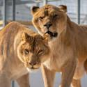 Tarif ticket visite le refuge Zoo la Tanière moins cher