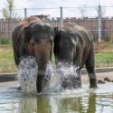 Tarif entrée moins chère Zoo refuge la Tanière